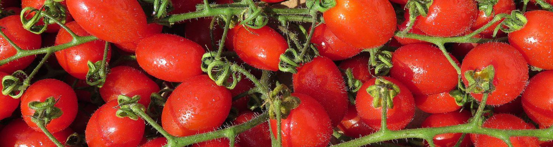 Rajčata San Marzano